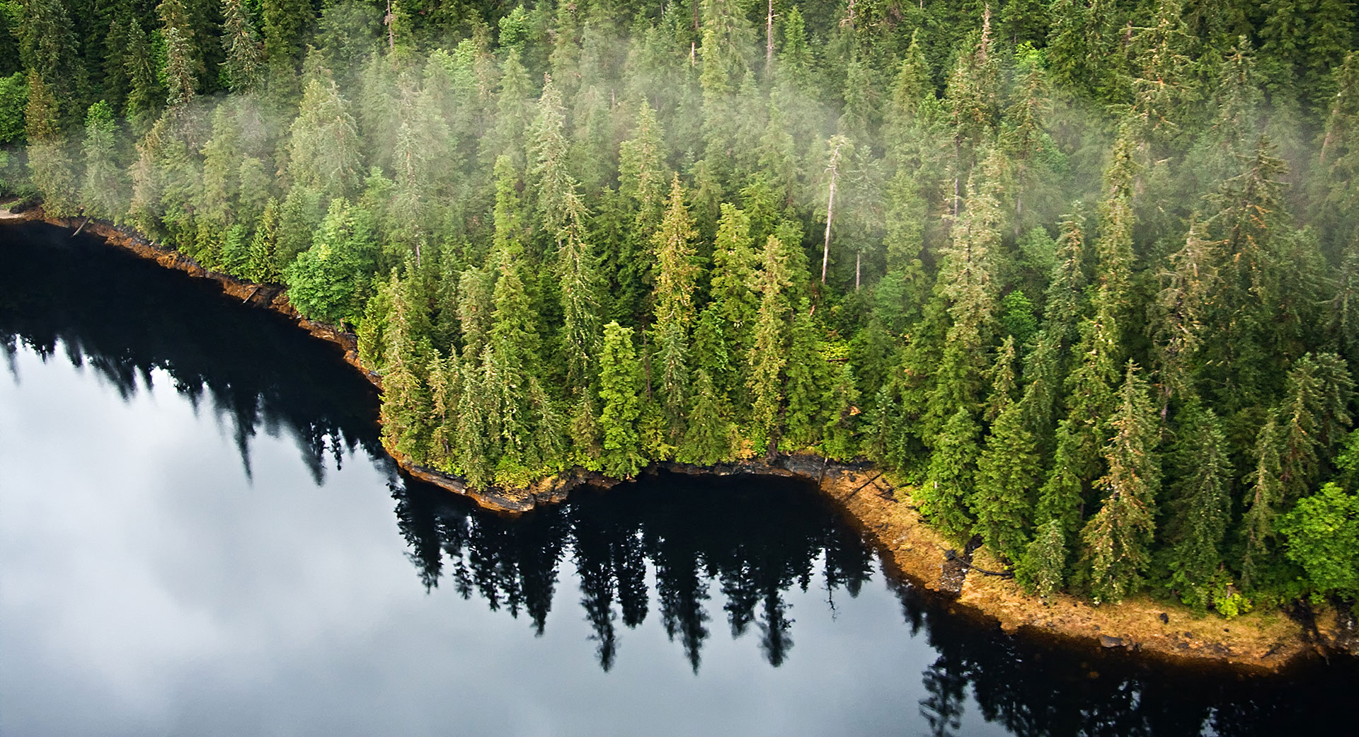 Protecting the world's last few temperate rainforest from deforestation