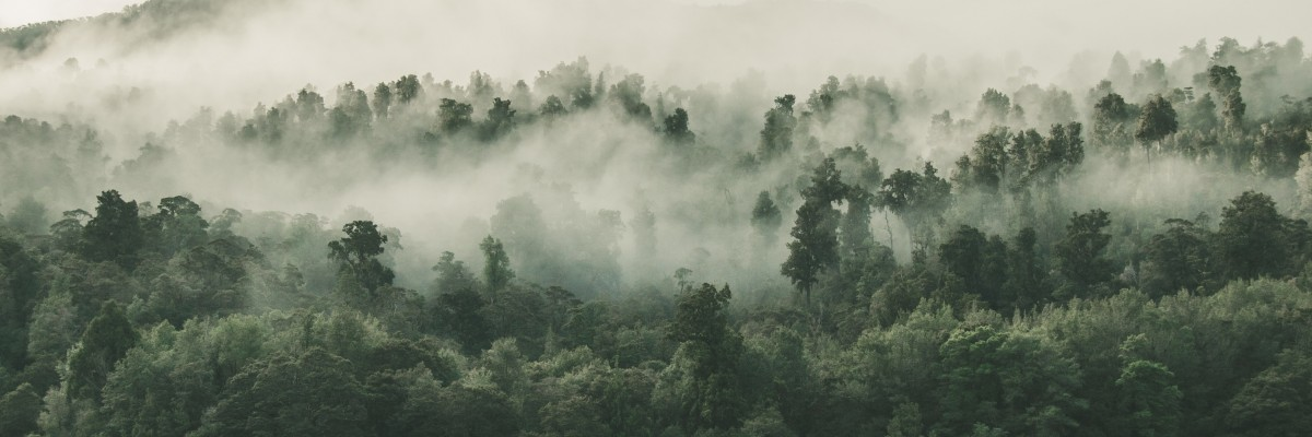 Forests slow climate change