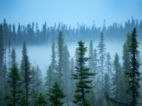Boreal forest in Northern Quebec