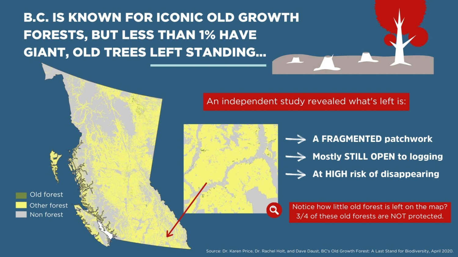 Graphic depicting how little old growth is left in B.C.
