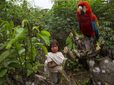 Child with a Macaw in the Amazon
