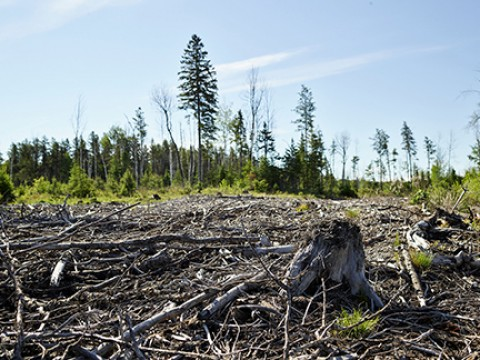 Canada-boreal-forest-clearcut-credit-NRDC