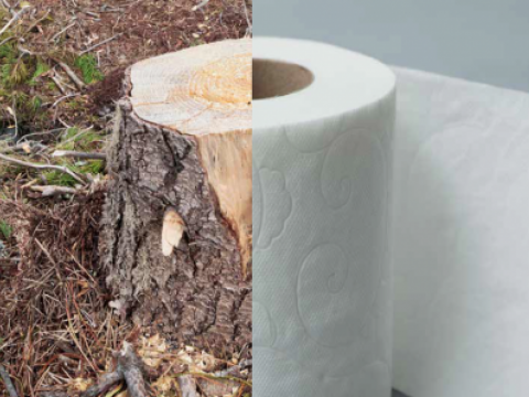 stand-earth-issue-with-tissue-report-tree-toilet-paper