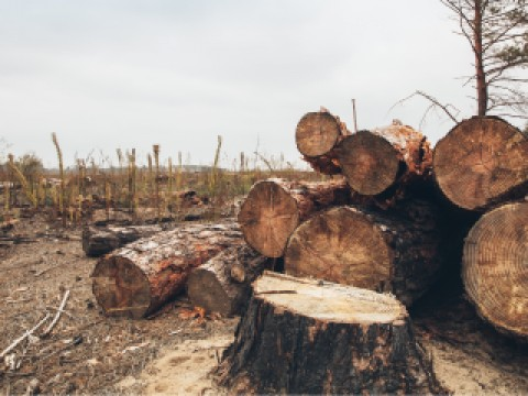Logging intact forests is a huge contributor to climate change