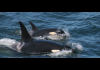 Whales asking to ban scrubbers